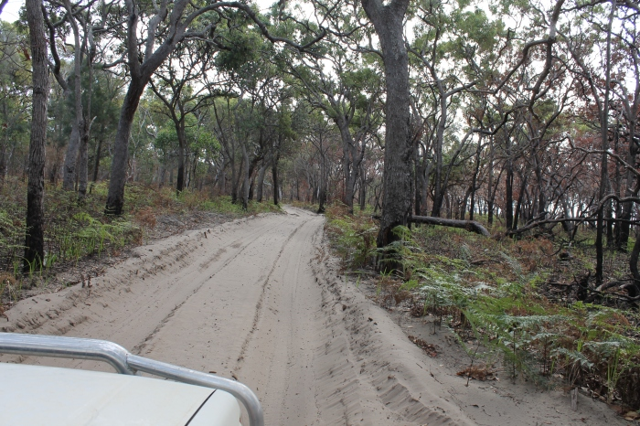 Fraser trails